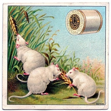 Some of Al's mice before they discovered the beer can
