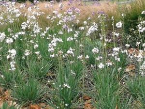 White Purple Flowers Grass close