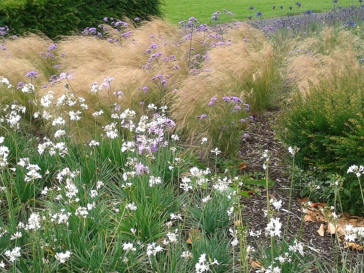 White Purple Grass
