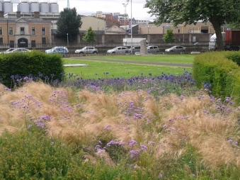 Grass Blue Flowers Close