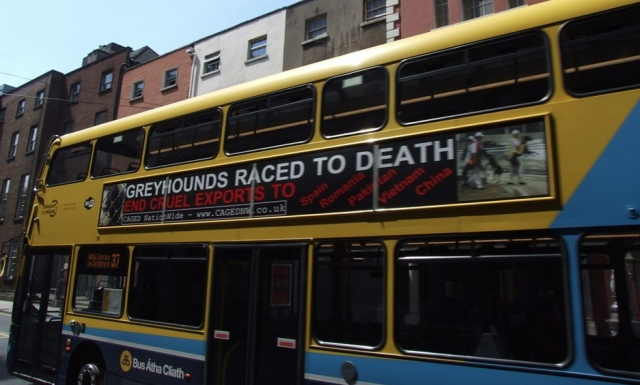 greyhounds-raced-to-death-dublin-bus.jpg